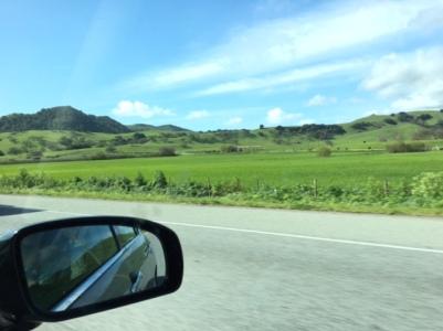green fields 2